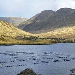 The fastest growing agricultural industry in Ireland is Aquaculture