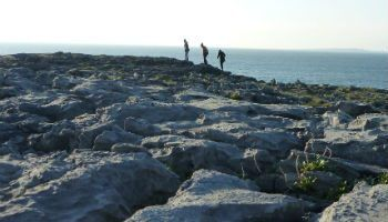 The Burren in Clare has one of a kind wildlife and landscapes as seen on our Gardens and Park Tours of Ireland