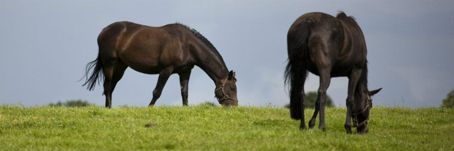 Visit The National Stud, County Kildare on a Leisure Tour of Ireland